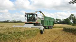 For tillage farmers the estimation of the yield in a field is difficult so there is a challenge to achieve a fair deal between both parties. Picture: Roger Jones.