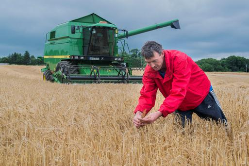 Edmund Leahy, Kilmagner, Fermoy, Co Cork is pictured harvesting Cassia winter barley sown on September 15th which yielded 3.8 tons per acre at 21% moisture & bushelled 65KPH. Photo O'Gorman Photography.