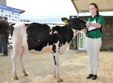 Six month old, 'Lisnalty Classic' sold for €3,750 at the IHFA Open Day.