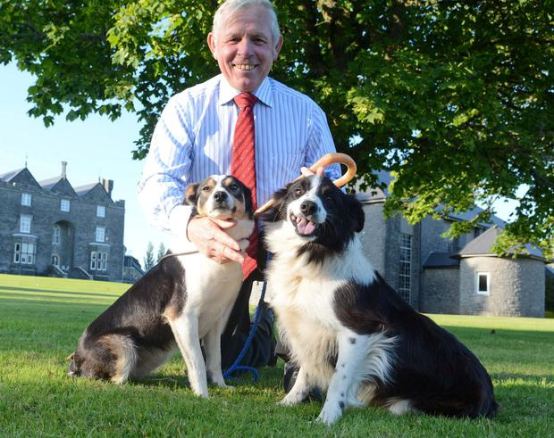 One man and his dog: Former world trial winner Con McGarry with his dogs Megan and Tara.
