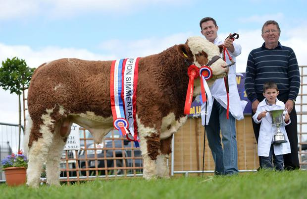 Dreamboy: The White's homebred Dermotstown Delboy was crowned Simmental champion at Tullamore show in 2013, and had buyers lining up the minute he left the ring