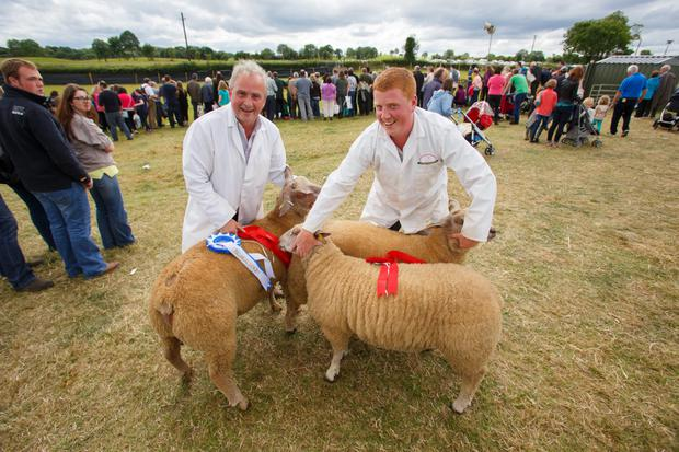 Frank and Alan Gibbons with Reserve Champion Charollais Ram Lamb and All Ireland Pair of Charollais Ram Lambs at the Tullamore Show and AIB National Livestock Show 2015 in Blueball, Tullamore. Picture: Jeff Harvey