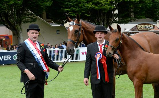 Dermot O'Sullivan (with foal) and his brother Brendan with Aidensfield Flamenco after they won the Breeders' Championship at the RDS