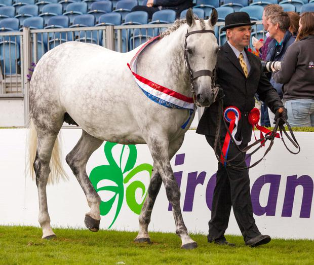 John Roche with his 2014 Breeders' Champion Assagart My Only Hope