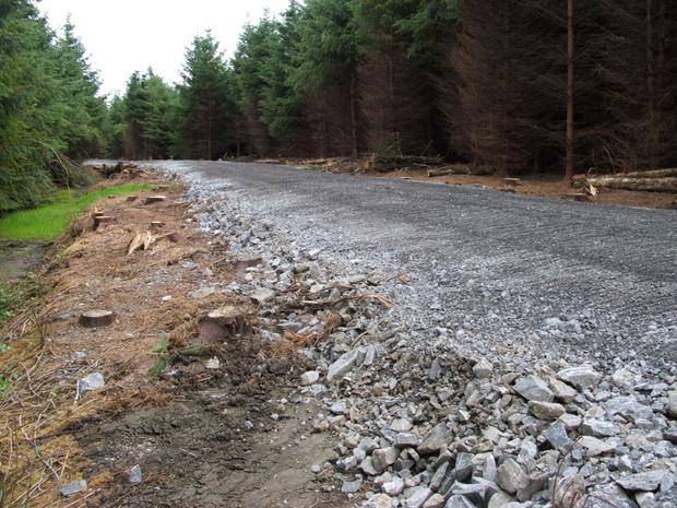 Completed road for thinning