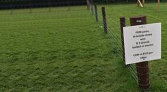 Sheep fencing with PDM posts