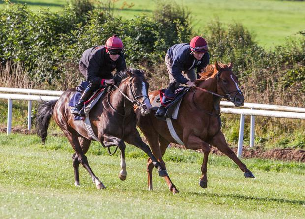 Haraz (nearest camera with Sean Corby on board) and Dawenkour (Shane Foley) exercising on the grass gallops at Copper Beech Stables