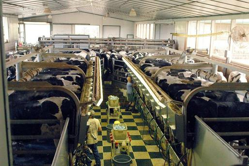 Armstrong Manor Farm, in Ontario, Canada is extending facilities to milk 400 cows. Cow comfort is a priority in the housing environment.