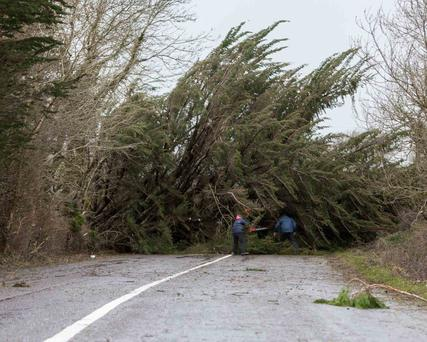 Tree damage during a storm is usually considered an 'act of God' and landowners have no liability for potential damages.