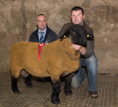 Judge Philip Gurney with Alan Kilpatrick and the Shealing Champion at the Donegal Pedigree Suffolk Sheep Breeders Show and Sale in Raphoe Livestock Mart. Photo: Clive Wasson