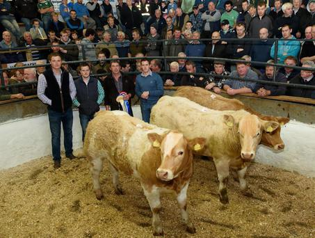Judges Eugene Dolan, James Penny and William Dolan with Pat Wilkinson from Creeslough who won 1st, 2nd and 3rd in the Charlaois Bull Class at the Milford Mart Weanling Show and Sale. Photo: Clive Wasson.