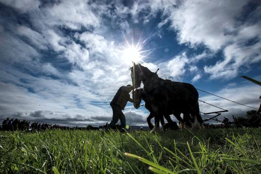 Competitors on the final day of the 2014 National Ploughing Championships at Ratheniska, Co. Laois. Pic:Mark Condren 25.9.2014