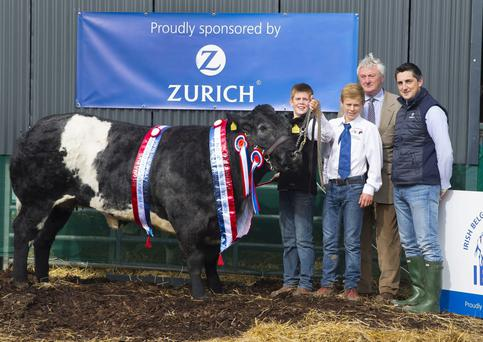 Scott Pearson (son of owner), Ballacolla, Co. Laois, Simon Coberg of Belgian Blue Society, Judge Seamus Neary and Head of Agri Business for Zurich Insurance Michael Doyle with Pedigree heifer
