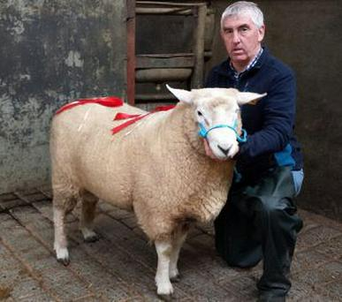 Sean KIlkelly with the champion hogget ram at the Galway Sheep Breeders Show and Sale in Athenry Mart