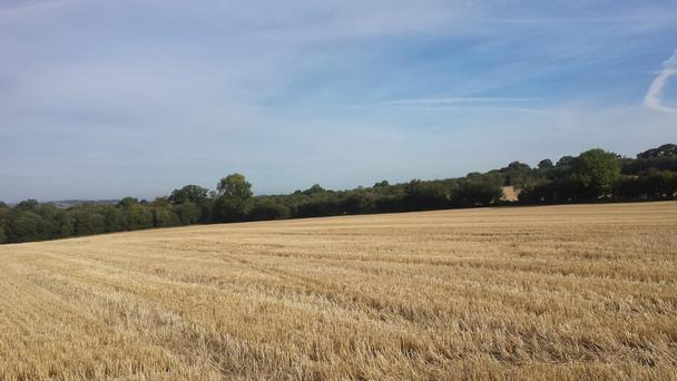 Rathsallagh, Co Wicklow - 125 acres of prime land