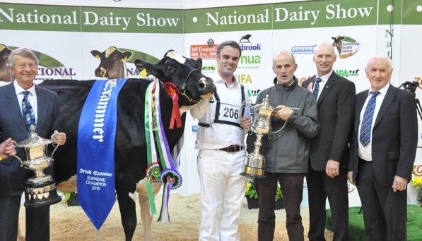 The 2015 National Dairy Show Supreme Champion 'Baldonnell Goldie Larissa' was exhibited by Cyril Dowling and Tadhg Bourke, Kilfinny, Adare, Co Limerick.