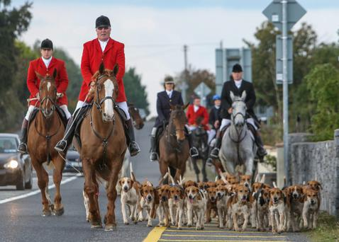 The famous Galway Blazers Hunt, led by huntsman Tom Dempsey, head for home after a great day's hunting from Craughwell.