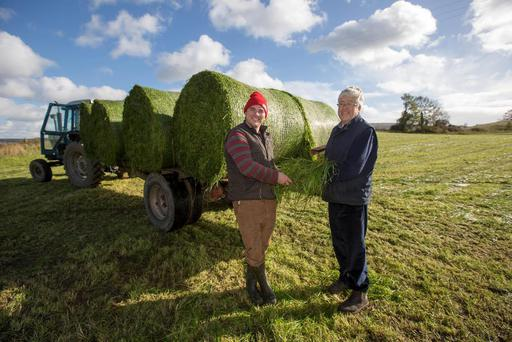 Joe and Andrew Fleming, Timahoe, Co. Laois zero grazing their own way by baling the freshly cut grass to being in for feed at Timahoe on Saturday 24 October 2015. Picture: Alf Harvey/HRPhoto.ie