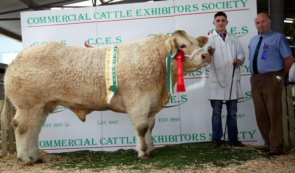 The Champion Charolais at Roscommon Winter Fair was entered by Robert & Mark McGivern and shown by Cathal O'Meara who is pictured above with Martin O'Connor