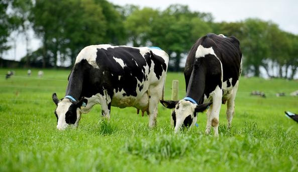 A long-term road map is required for liquid milk producers.