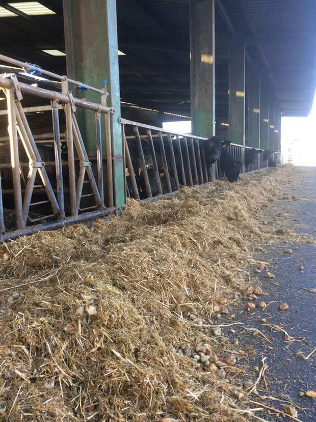 There should only be marginal increases in feed costs for livestock this winter.