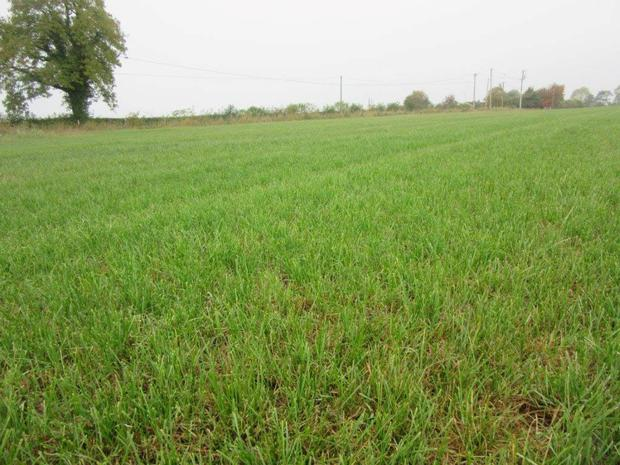 Grass cover on a paddock that was closed off earlier this month