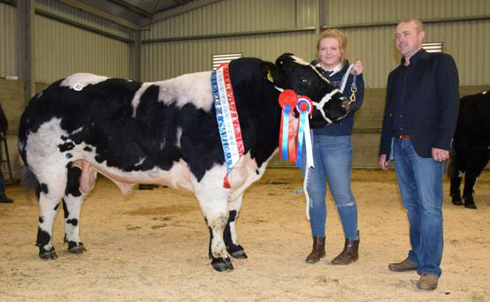 Sheehills Inspiration - the Champion Bull at the recent Belgian Blue Society Premier Show and Sale in Roscrea Mart - with breeder Leanne Searson and judge Derrick Forde