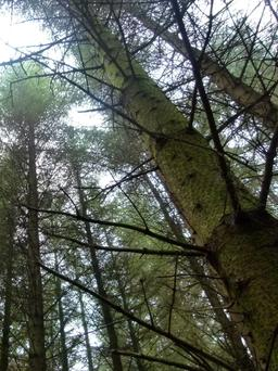 Drumod Beg Wood is being considered for clear felling in four years' time.