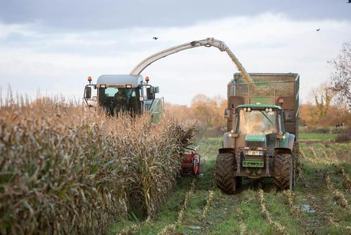 Harvesting maize for Ronan Farrell at Ballylinan, Co. Laois is Michael Quigley, Quigley Agri Contracting, Kildangan, Co. Kildare. Sown on the 20 April it was harvested on the 6 November yielding close to 22 tonne per acre. Photo: Alf Harvey.