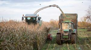 Harvesting maize for Ronan Farrell at Ballylinan, Co. Laois is Michael Quigley, Quigley Agri Contracting, Kildangan, Co. Kildare. Photo: Alf Harvey.