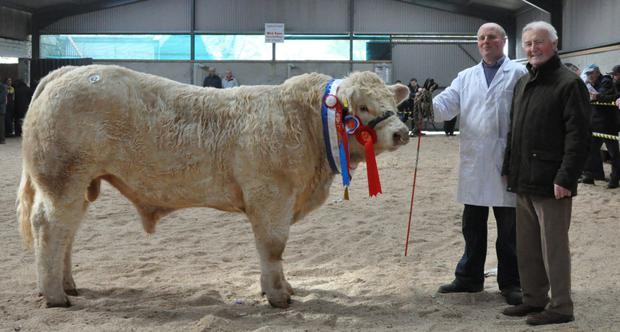 Aidan Farrell, Boyanna, Moate, with 'Williamstown Jude' Overall Champion of the Show, and Arthur Finnan, judge, at the Irish Charolais Society Show and Sale at GVM Mart, Tullamore.