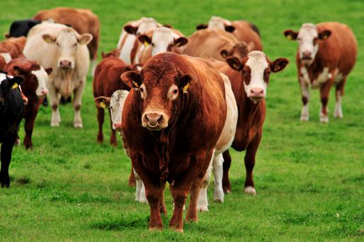 Cattle prices are up.
