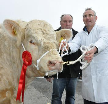 John Byrne, Craanford, Gorey, exhibitor, and Paudge McGuire, judge, with the winner of the class for bulls born July to September 5, 2014, at the Irish Charolais Society Show and Sale at Ennis.