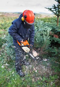 Hard at work in Wicklow Way Christmas Trees as the countdown to the festive season gets underway. Photo: Tony Kinlan.