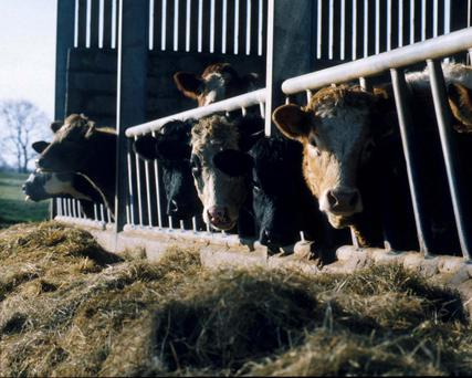 An effective treatment programme shortly after housing will keep cattle free of parasites until they return to pasture or are slaughtered.