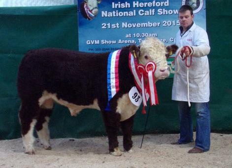 Supreme Champion Corlismorepoll 1 Lad 794Sean McKiernan, Corlismore, Co Cavan at the Irish Hereford Society Calf Show at Tullamore.