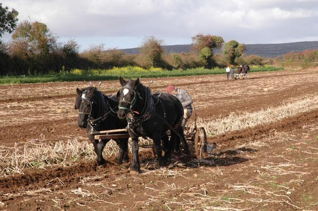 Ploughing at the Burren Winterage Festival in Co Clare