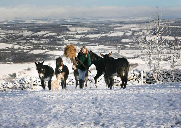 Sue Paling forking fodder last January at the Sathya Sai Sanctuary for rescued donkeys on the slopes of the Bricklieve Mountains, Co Sligo.