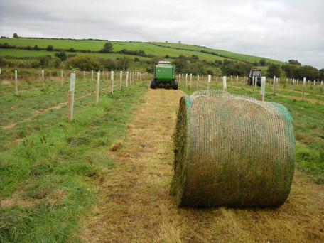 Silage and hay cutting is permitted in gran-aided agroforestry sites