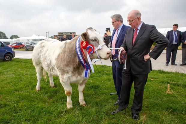 The Minister for Foreign Affairs Charlie Flanagan takes a good look at the champion Belgian Blue from this year's Tullamore Show. Photo: Jeff Harvey