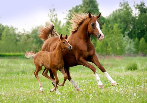 The Irish Equine Centre has been protecting the Irish bloodstock and sport horse industry for over 30 years.