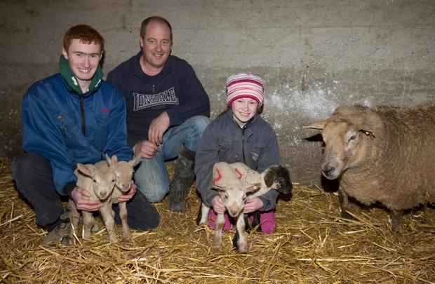 David Creane assisted by his nephew Aaron Hayes and niece Leah Hayes with some of his newly born lambs on his farm at Kilmyshall, Bunclody, Co Wexford. Photo: Alf Harvey/HRPhoto.ie