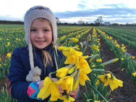 Abbie Slacke with the first of 2016's daffodils at Elmgrove Farm, Gormanston, Co Meath