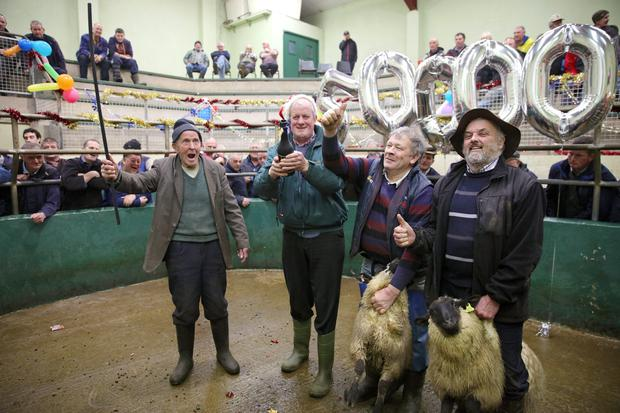 Celebrating Kenmare Mart reaching the milestone of 50,000 sheep sold were (from left) Eugene O'Sullivan, Ireland's oldest drover; Cllr Dan McCarthy,mart manager; Mike Tim O'Sullivan, chairman, and buyer Michael Kirwan, Tipperary with a Suffolk lot. Photo: Valerie O'Sullivan