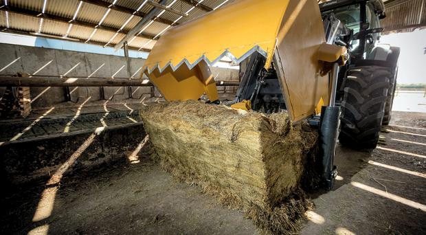 Why farmers are facing big deficits in forage quality and quantity