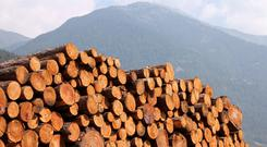 Forestry is one of the oldest forms of investment.