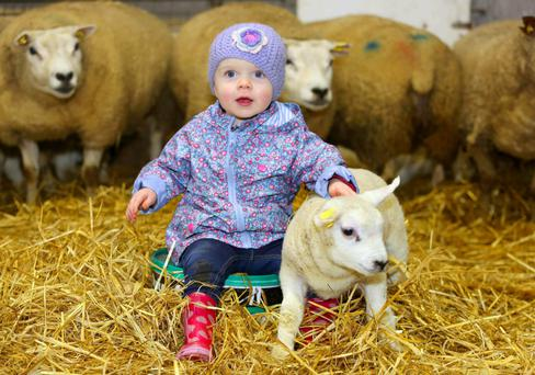TJ Gormley's granddaughter Cara Quirke (2) with Dynamo the lamb. Photo: Hany Marzouk