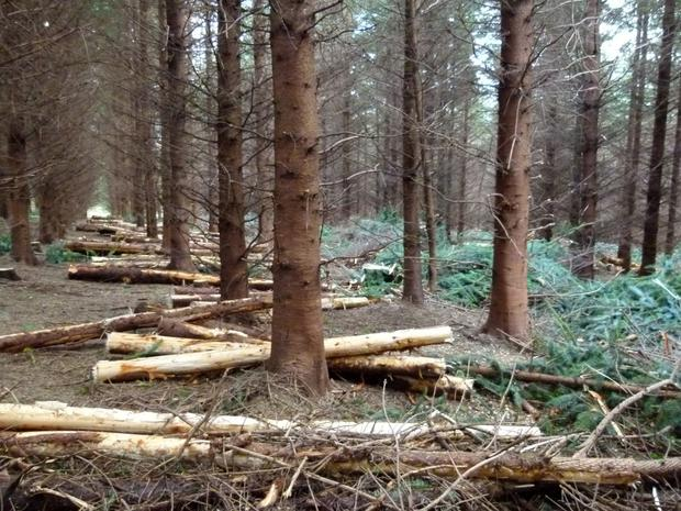 The bulk of the management questions focus on preparing for thinning. Forest owners want to know how the thinning process works, what the value is of timber and how to organise a timber sale. Photo: Teagasc.