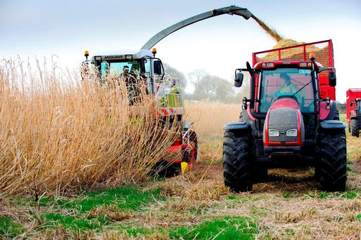 Nothing has been done to incentivise Irish farmers to grow crops for the bioenergy sector.