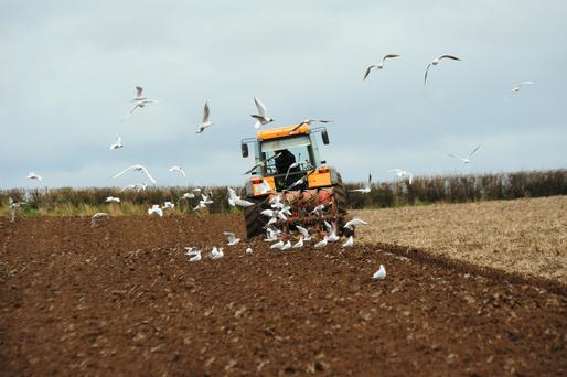 Ploughing ground for new crop releases up to one tonne of carbon into the atmosphere.